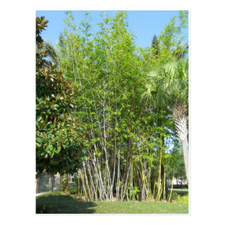Lakeside Bamboo Postcard