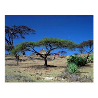 Lakeside scene at Lake Langano, Ethiopia Postcard