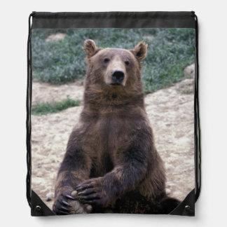 L'Alaska, Ursus du sud-est d'ours de Brown de Sac À Dos