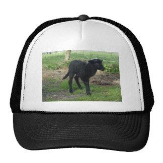 Lamb 2012 - AnnieMackie Trucker Hat