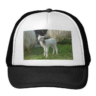 Lamb 2012 - Cianna Trucker Hat