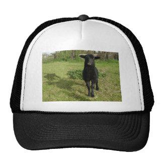Lamb 2012 - Jilly Trucker Hat
