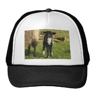 Lamb 2012 - Paul-B Trucker Hat