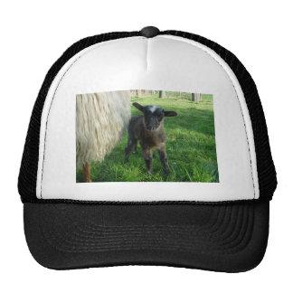 Lamb 2012 - Poddys Trucker Hat