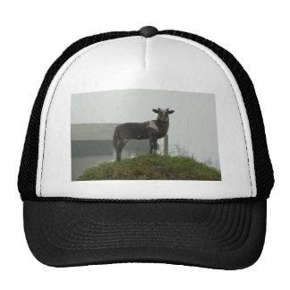 Lamb 2012 - Shimo Trucker Hat