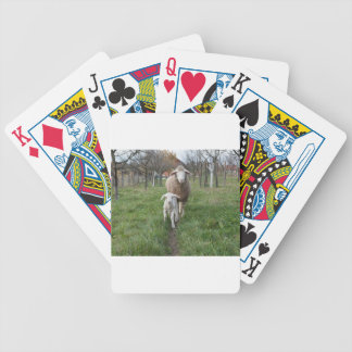 Lamb and sheep bicycle playing cards