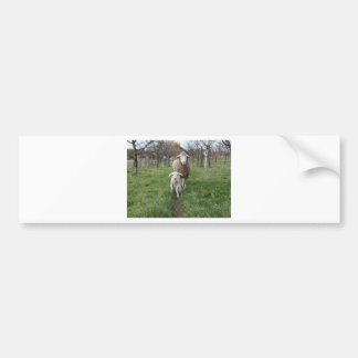 Lamb and sheep bumper sticker