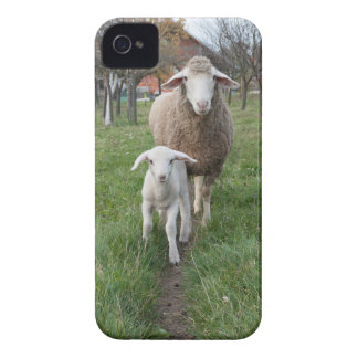 Lamb and sheep iPhone 4 covers
