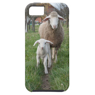 Lamb and sheep iPhone 5 covers