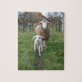 Lamb and sheep jigsaw puzzle
