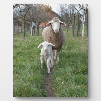 Lamb and sheep plaque