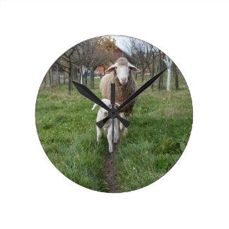 Lamb and sheep round clock