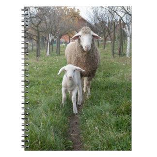 Lamb and sheep spiral notebook