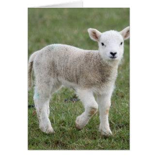 Lamb Note Card