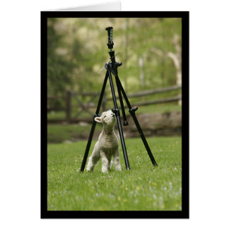 Lamb with a tripod Notecard
