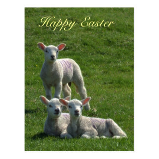 Lambs Easter Postcard