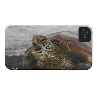 L'Amérique du Sud, Equateur, îles de Galapagos, 2 Coque Case-Mate iPhone 4