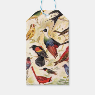 Lamina Birds Pack Of Gift Tags