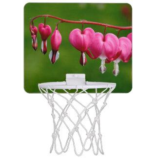 Lamprocapnos spectabilis mini basketball hoop