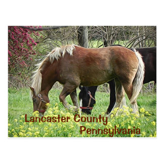 Lancaster County Pennsylvania - Postcard