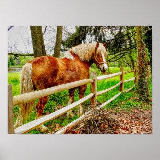 Lancaster Horse - Art Print