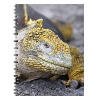 Land Iguana Notebooks