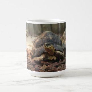 Land Turtle Coffee Mug