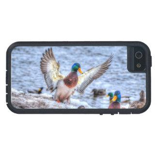 Landing Mallard Duck Drake 5 Wildlife Photo iPhone 5 Cases