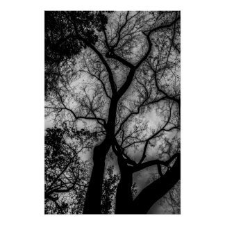 Landscape Black and White Tree Photo Poster