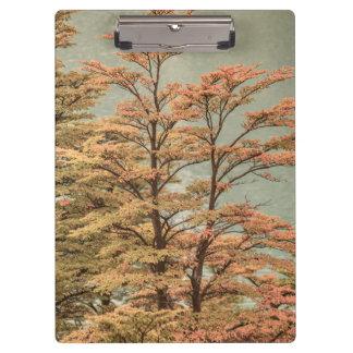 Landscape Scene Colored Trees at Glacier Lake Clipboard