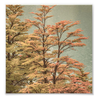Landscape Scene Colored Trees at Glacier Lake Photo Print