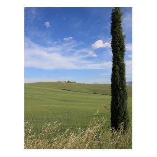 Landscape with Cypress Postcard