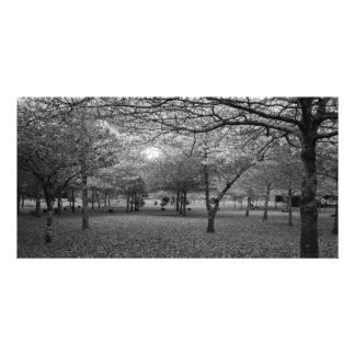 Landscape with trees photo card template
