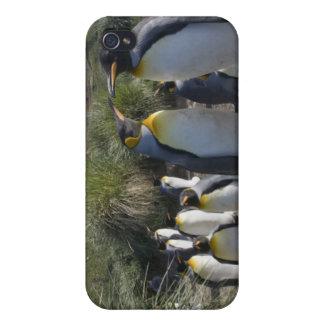 L'Antarctique, île du sud R-U de la Géorgie), roi  Coques iPhone 4