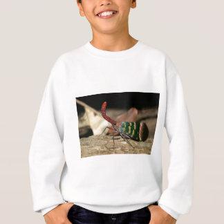 Lantern cicada sweatshirt