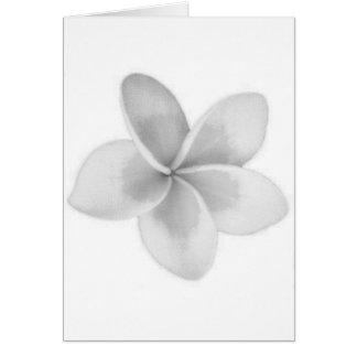 LAO FLOWER DOK CHAMPA - PLUMERIA CARD