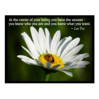 Lao Tzu Quote Ladybird Daisy Inspiring Motivation Postcard