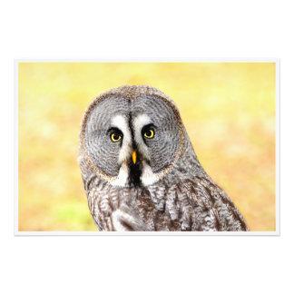 Lapland owl. photo print