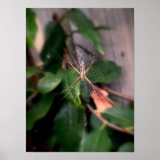 L'araignée de jardin affiches