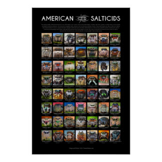 "L'araignée sautante ""de Salticids d'Américain"" Poster"