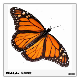 """Large 12"""" Butterfly Decal - Monarch male"""