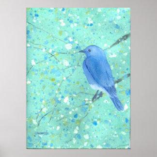 Large Bluebird  Print