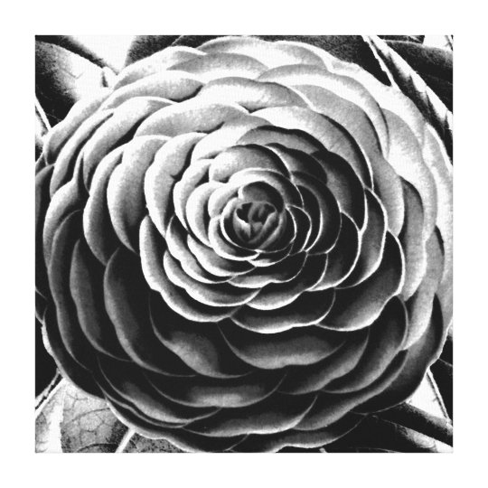 Large Camellia, Black, White and Grey / Grey Canvas Print