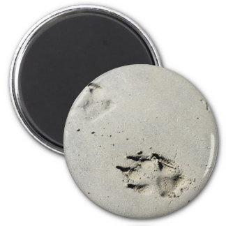 Large dog's paw prints on wet sand magnet