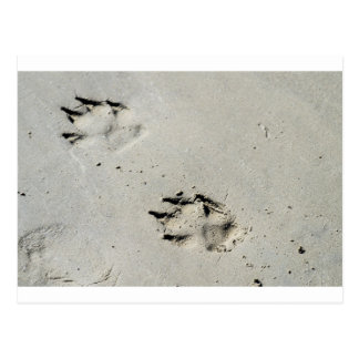Large dog's paw prints on wet sand postcard