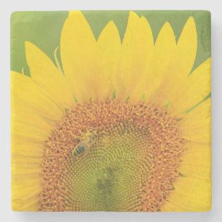 Large field of sunflowers near Moses Lake, WA 1 Stone Beverage Coaster