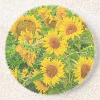 Large field of sunflowers near Moses Lake, WA 2 Drink Coasters