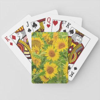 Large field of sunflowers near Moses Lake, WA 2 Poker Deck