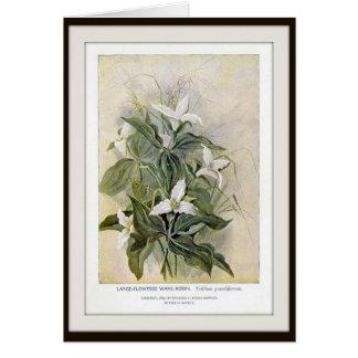 Large-Flowered Wake-Robin Wildflower Blank Card