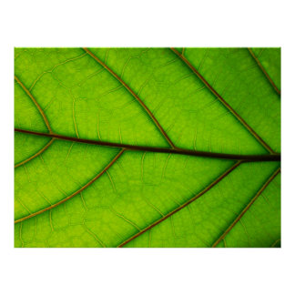 Large Green Leaf poster